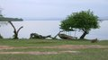 Lake mburo national park waterside scenery at the in uganda africa at evening time Stock Image