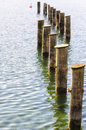 At the lake old tree trunks a Royalty Free Stock Photography