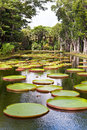 The lake in park with Victoria amazonica, Royalty Free Stock Image
