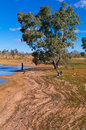 Lake pinaroo vegetation sprouting along strand lines on shore of full in for the first time since the s in sturt national park Stock Images
