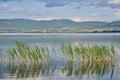 Lake and reed Royalty Free Stock Photo