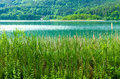 Lake with reed view on the worthersee in austria Royalty Free Stock Photo