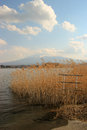 A lake with reeds with a mountain Royalty Free Stock Photography