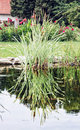 Lake and reflecting green reed in the garden Royalty Free Stock Photo