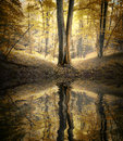 Lake with reflection of tree in a colorful forest in autumn Royalty Free Stock Photo