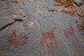 Lake Superior Provincial Park Royalty Free Stock Photo