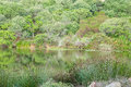 Lake surrounded by indigenous plants near stellenbosch on a farm Royalty Free Stock Image