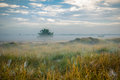 Lake and swamps area at misty morning sunsetmorning netherlands dwingelderveld Royalty Free Stock Image