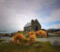 Lake Tekapo Church Royalty Free Stock Photo