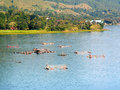 Lake Toba Royalty Free Stock Photography