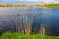 Lake and vegetation still freshwater Stock Image
