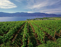 Lake and vineyards Royalty Free Stock Photography