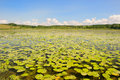 Lake with water lilies and yellow brandy bottles in france Stock Images