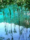 Lake weed and Royalty Free Stock Photography