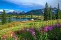 Lake and wildflowers camping in the san juans of colorado Stock Image