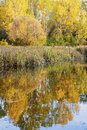 Lake and yellow and orange fall foliage trees scene with  reflection in  water Royalty Free Stock Photo