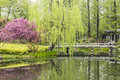The lakeside green trees and peach blossom Royalty Free Stock Photo
