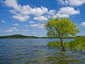 Lakeside landscape a tree standing in the water of a beautiful lake Royalty Free Stock Photo