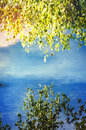 Lakeside in sun a with a birch tree the summer Royalty Free Stock Image