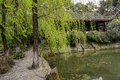 Lakeside willows in spring breeze chengdu china vivid green twigs of by the are swinging Stock Images