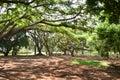 Lalbagh Botanical Gardens, Bangalore, Karnataka, Royalty Free Stock Photo