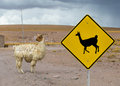 Lama crossing traffic sign altiplano bolivia south america Royalty Free Stock Photo