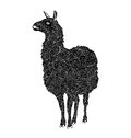 Lama vector black and white Royalty Free Stock Photo