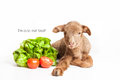 Lamb isolated on white background with salad and t Stock Image