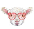 Lamb in Love! Portrait of Lamb with heart shaped sunglasses.