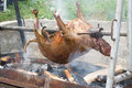 Lamb rotisserie tasty in the oven Royalty Free Stock Photo