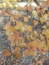 Lame d automne Photos stock