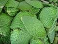 Lames de cactus Photos libres de droits