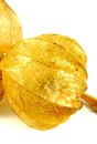 Lampion flower makro of to white reason Royalty Free Stock Photo