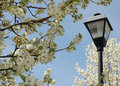 Lamppost in the Trees Royalty Free Stock Images