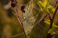 Lan spider spider web on the grass Royalty Free Stock Photos