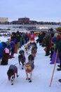 Lance Mackey Begins the Yukon Quest Royalty Free Stock Image