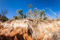 Land erosion natural along the shoreline on big talbot island in jacksonville Stock Image