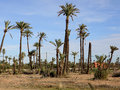 Landcape of palms in marrakech Stock Photo