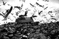Landfill and birds truck working in with in the sky Royalty Free Stock Photography