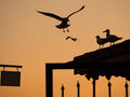 Landing seagull a is and others watching it Royalty Free Stock Images