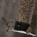 Landing On A Snowy Bird Feeder