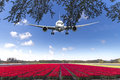 Landing on a tulips red carpet Royalty Free Stock Photo
