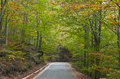 Landscape in autumn forest road background Royalty Free Stock Image