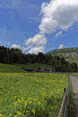 Landscape bucolic in spring with blue sky and clouds Stock Photos