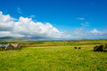 Landscape with Cows at the Coast of Ireland Royalty Free Stock Photo