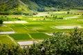Landscape detail of green taro fields in Hanalei valley, Kauai Royalty Free Stock Photo