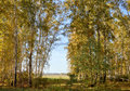Landscape early autumn. Glade with yellow grass and leaves on the background of autumn birch grove in the distance field and villa Royalty Free Stock Photo