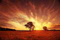 Landscape fantastic sunset on the wheat field Royalty Free Stock Photo