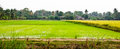 Landscape of farm Royalty Free Stock Images