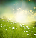 Landscape field of daisies sky and sun Royalty Free Stock Photography